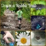 Down a Rabbit Trail