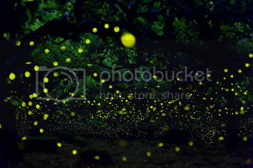 Yume Cyan long exposure photograph of fireflies in the forests of Nagoya City, Japan