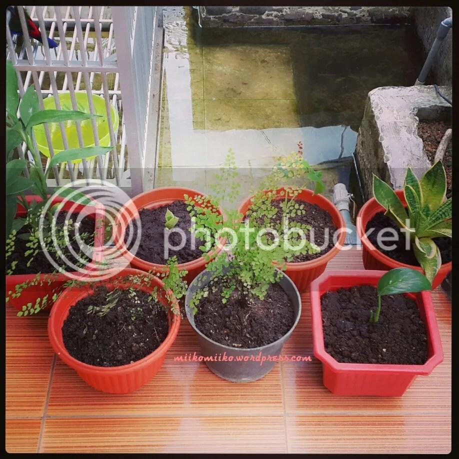 tanamanku