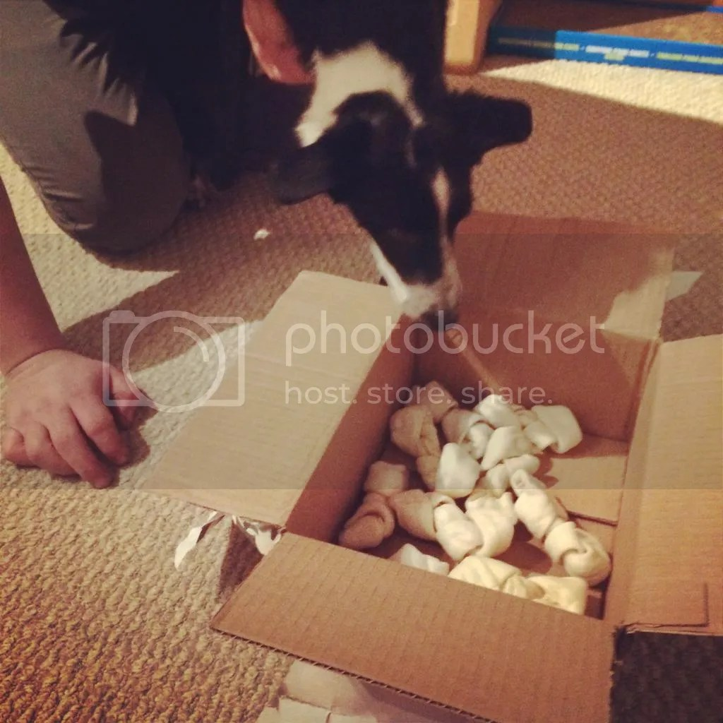 Christmas Gifts for Dogs and Puppies box of bones