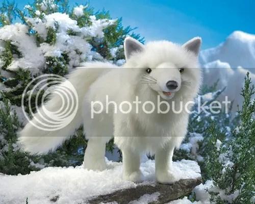 photo FOLKMANIS Arctic Fox_zps1dqstne0.jpg