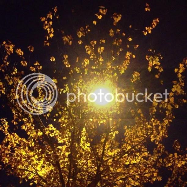 photo g10_zpsa94c9e18.jpg