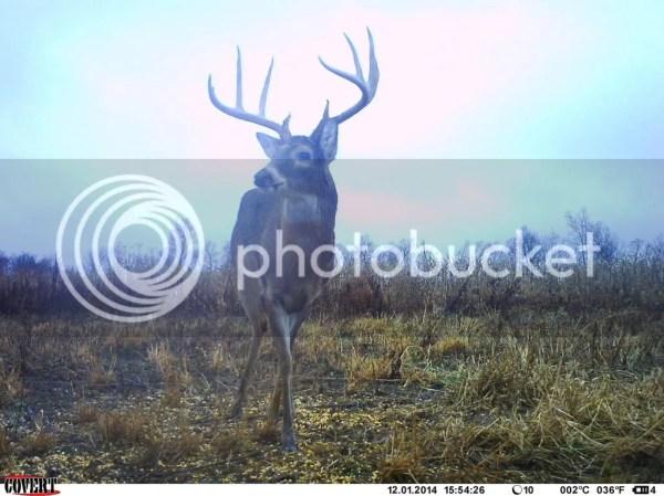 December pics … - Deer Hunting | In-Depth Outdoors