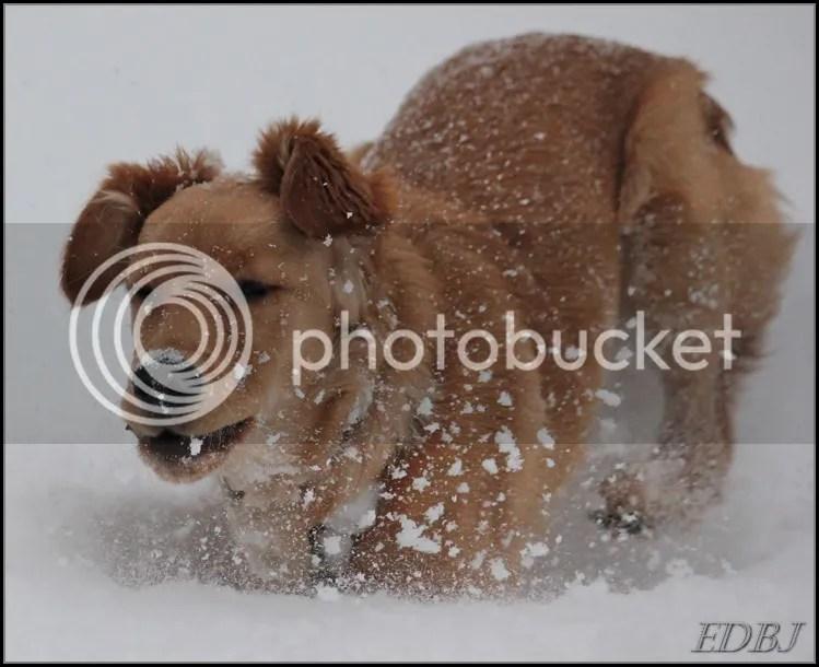 photo Vinterbilderjan14060_zps2cd0e639.jpg