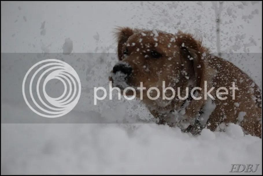photo Vinterbilderjan14077_zps289508a5.jpg