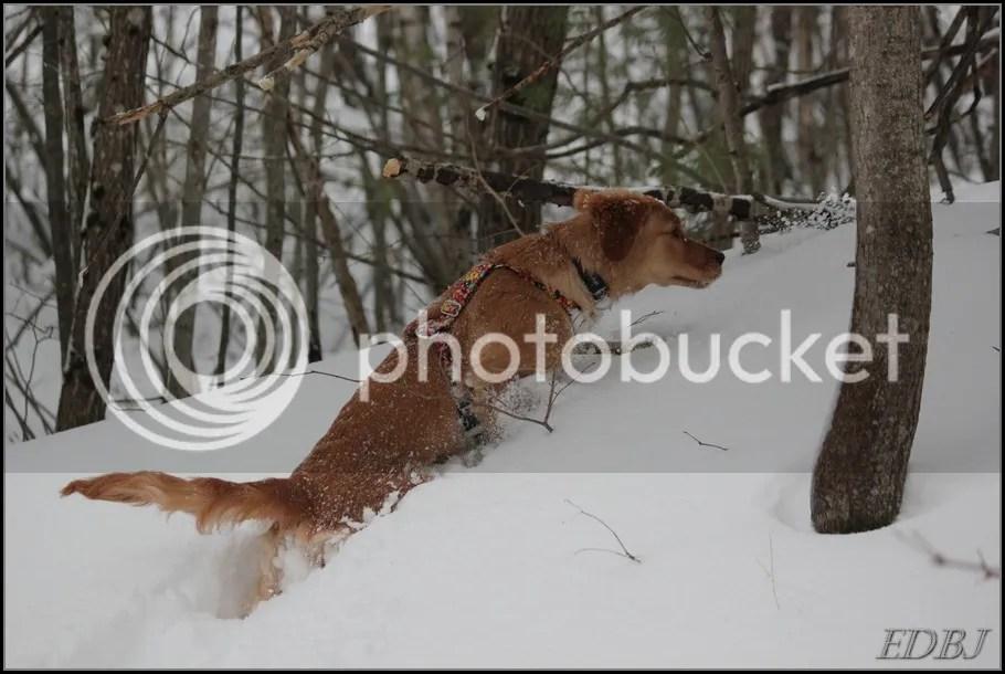 photo Vinterbilderjan14096_zps1f26ee53.jpg