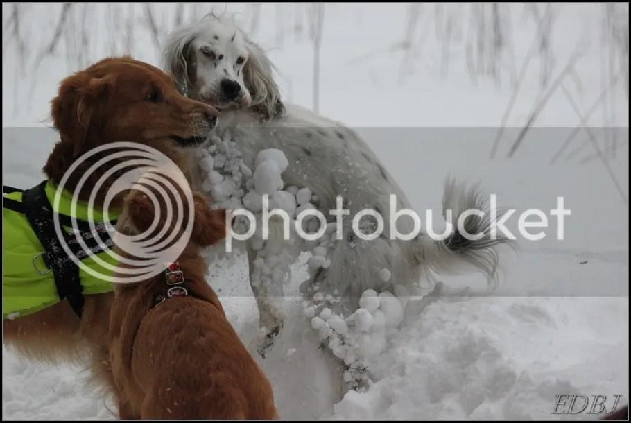 photo Vinterbilderjan14126_zpsb3d98286.jpg