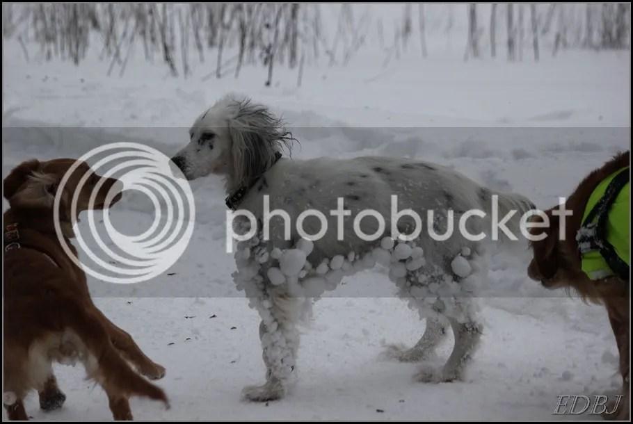 photo Vinterbilderjan14127_zps681283b2.jpg