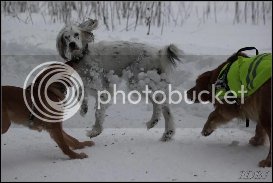 photo Vinterbilderjan14128_zps481e73f4.jpg