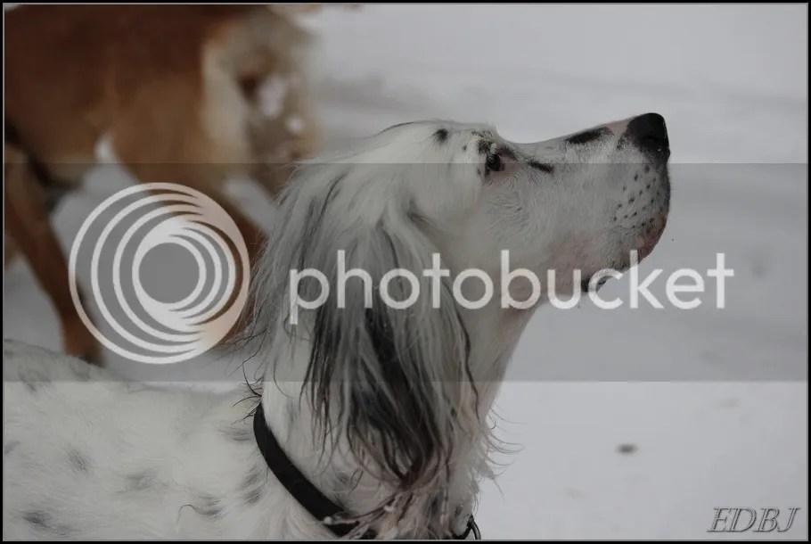 photo Vinterbilderjan14145_zps2eefe41f.jpg