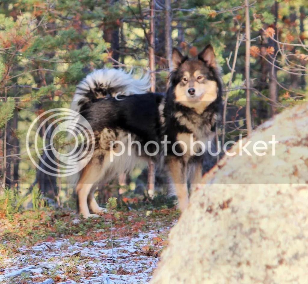 photo 2014-10-211_zps0f40549c.jpg
