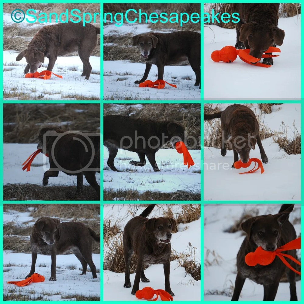 FitDog Friday~Wet Wubba's In The Snow & A Hay Bale (6/6)