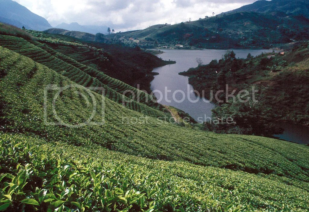 photo 1024px-Sri_Lanka_Teeplantage_zps1d436404.jpg