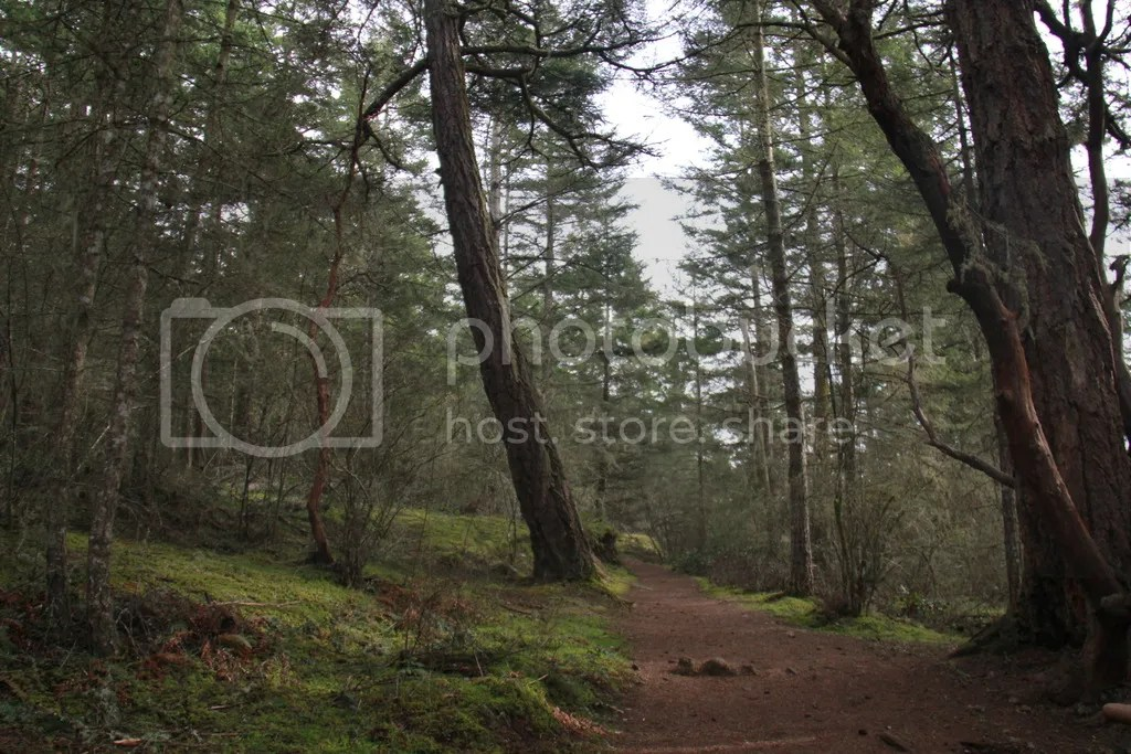 photo a forest hymn 5_zpsaht2mi3x.jpg