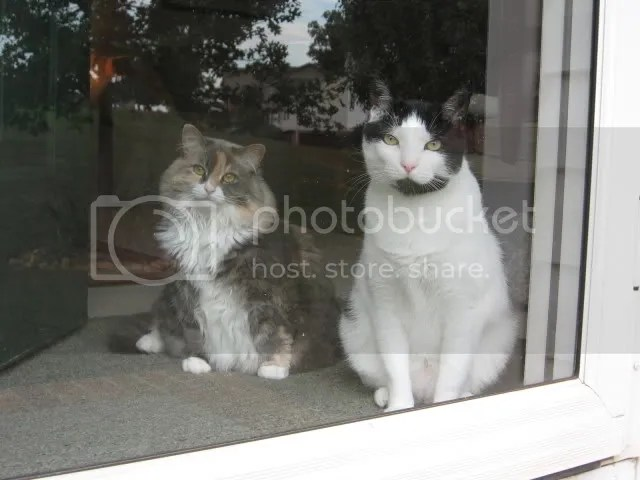 Polly (left) and Gary (right) waiting at the door to escape.