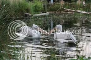 Keek op de week - zwemmende vogels in Amersfoort