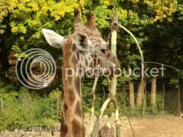 Zomervakantie... de dierentuin!