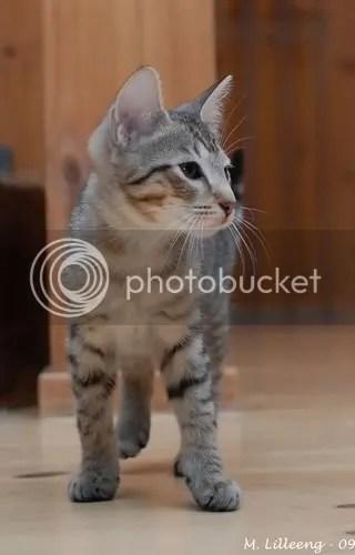 Anubis 14 uker gammel