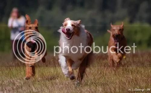 Peico, Bridie og Lissy