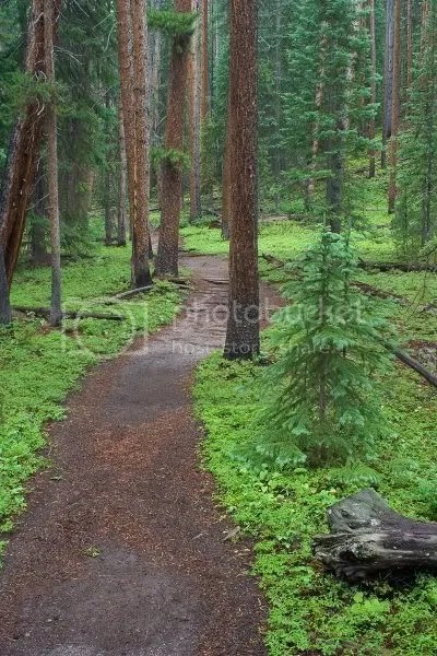 Walk in the Woods Pictures, Images and Photos