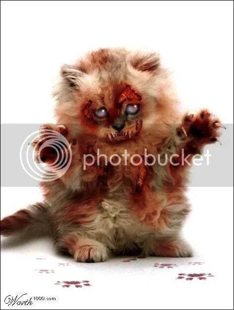 zombie-cat.jpg zombie cat image by 666-JUGGALO-666-JUGGALO-666