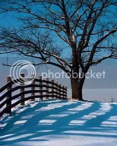 gladys fence