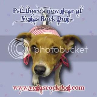 newgearcopy.jpg picture by vegasrockdog