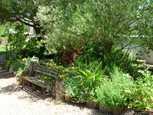 Part of my Mediterranean Herb Garden