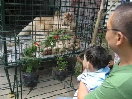This is also my first time to see a white lion...but Im not letting my son notice.