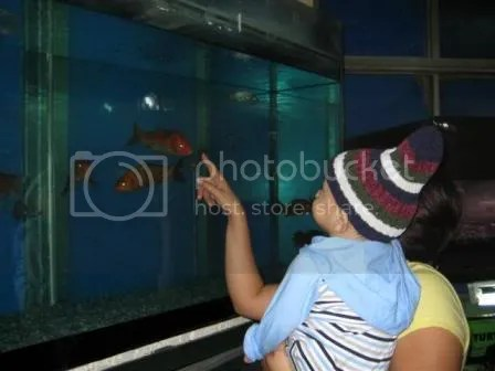 Checking one of the aquariums.