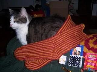 Oscar loves knitting too