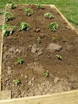 Vegetable Garden Pictures, Images and Photos