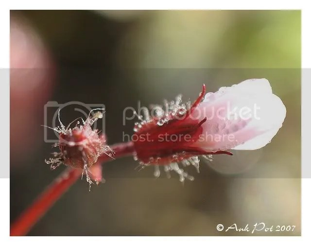 Rose bloemetje