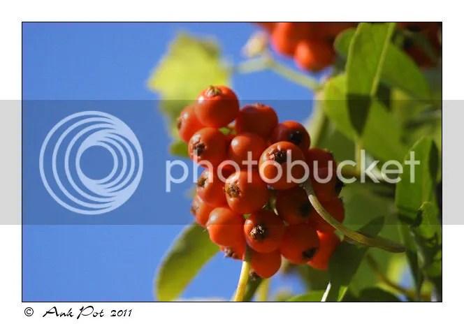 Log19-8-11-1.jpg