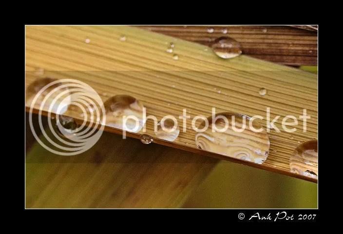 Log5-12-07-3.jpg