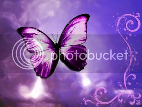 butterfly_005butterflae.jpg image by revmyspace2
