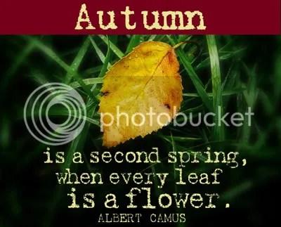 Fall Blog Post