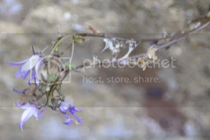 photo fc94a281-b9a5-4d72-b754-0f3e8b0c9ecc_zpspqbvlluv.jpg