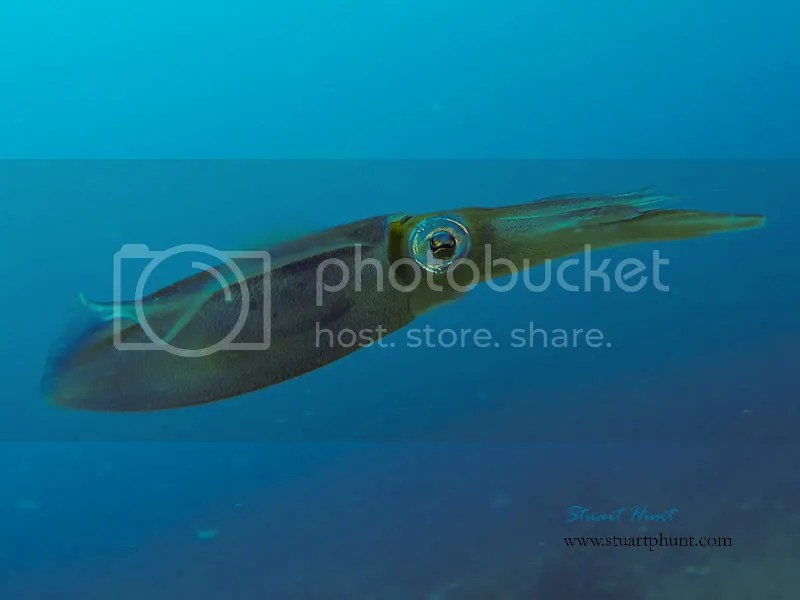 veneers boynton beach