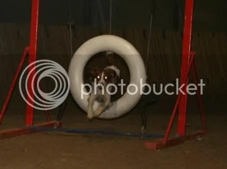 Maiko i hjulet