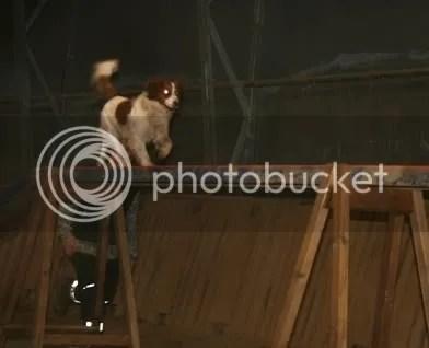 Maiko på stigen