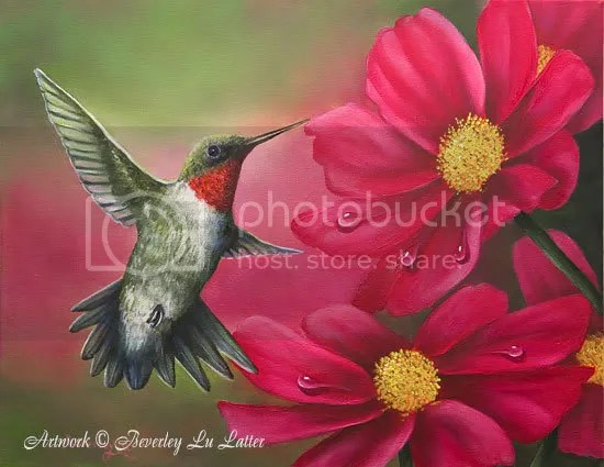 hummer on cosmos Pictures, Images and Photos