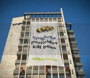 Greenpeace banner on Syngenta building saying Syngenta pesticides kill bees