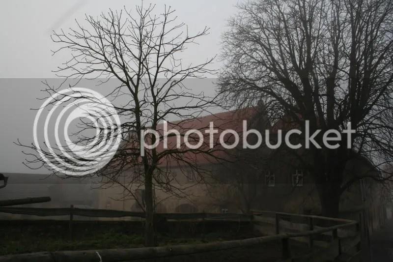 tree church court yard ilbenstadt