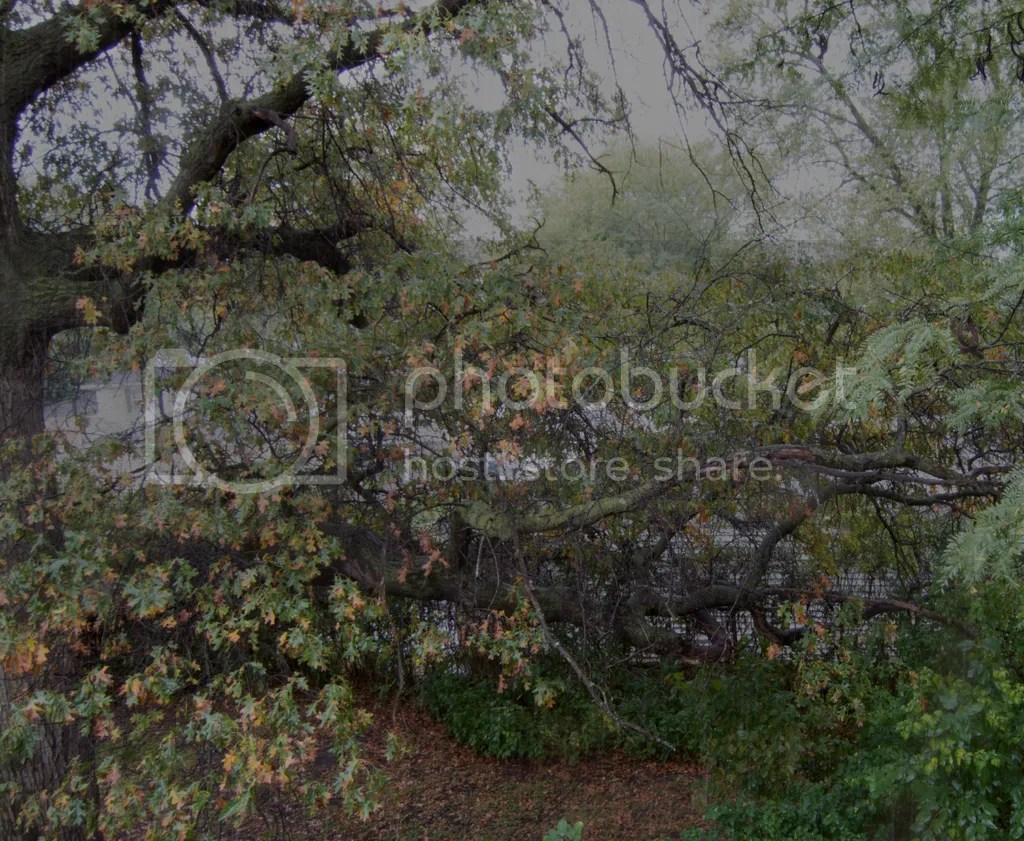 Rainy Day window image