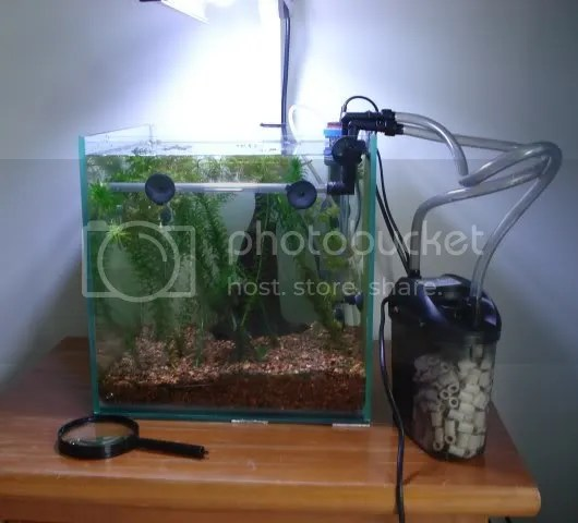 Image result for canister filter aquarium forums