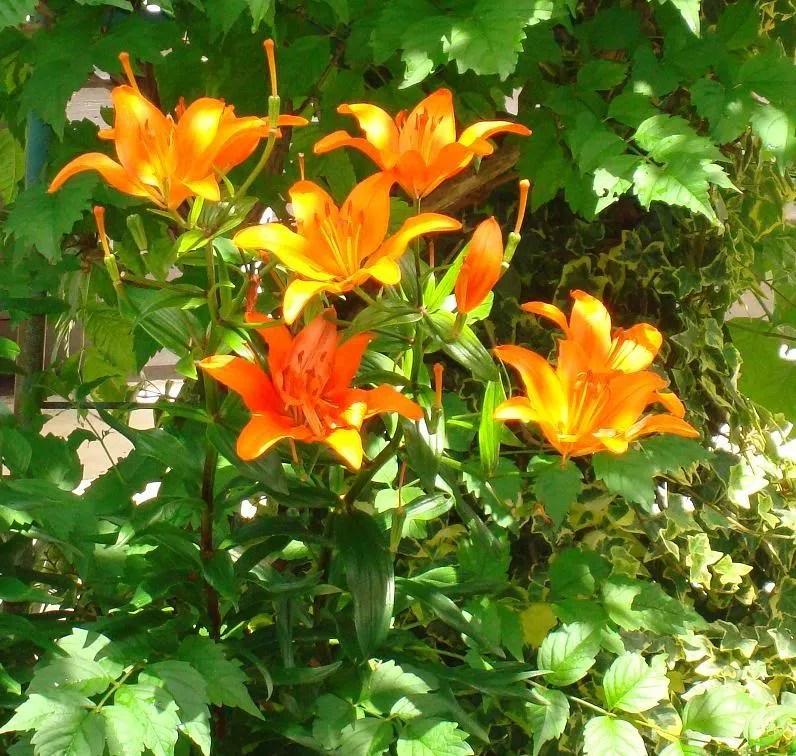 Orange Opulence