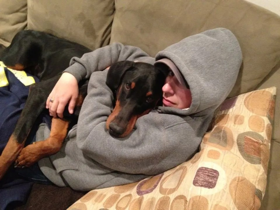 Image result for dog deep pressure therapy