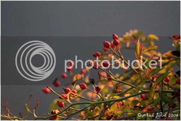 Log2-12-08-5.jpg picture by Knatop
