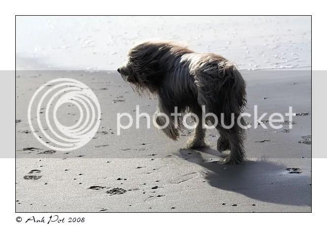 Log12-11-08-2.jpg picture by Knatop